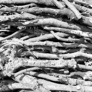 Woodpile - Voigtlander Bessa R2 - 50mm Summicron | Leica SUMMICRON 50mm f2 <br> Click image for more details, Click <b>X</b> on top right of image to close