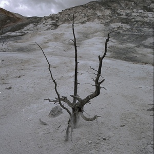 Lone Tree, Mammoth Hot Springs | Zeiss ZM Biogon T* f2.0 35mm