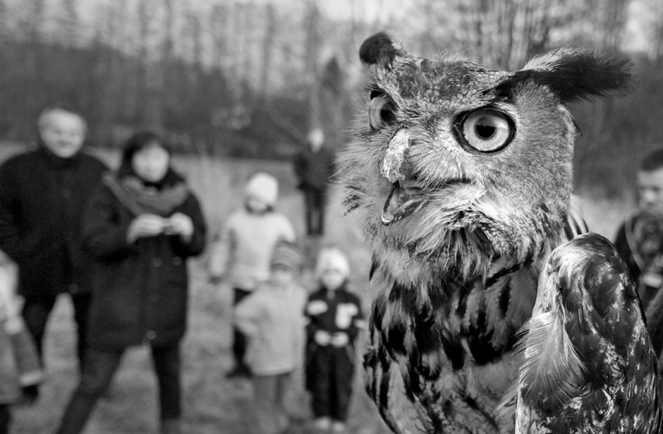 Eagle Owl rescued | Zeiss Touit f2.8 12mm  <br> Click image for more details, Click <b>X</b> on top right of image to close