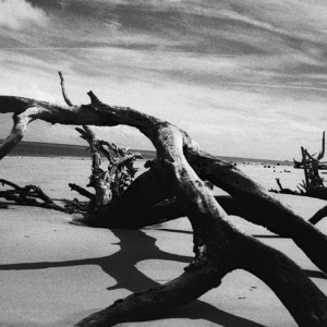 Jekyll Island Driftwood | Zeiss ZF.2 Distagon T* f2.0 35mm <br> Click image for more details, Click <b>X</b> on top right of image to close