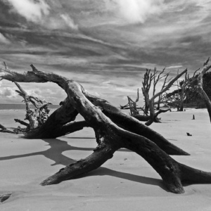 Jekyll Island Driftwood Beach | Zeiss ZF.2 Distagon T* f2.0 35mm <br> Click image for more details, Click <b>X</b> on top right of image to close